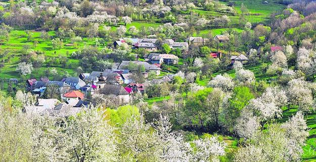Brdárka, to je 40 domov a chotár, v ktorom na každý z domov pripadá viac ako sto čerešňových stromov.