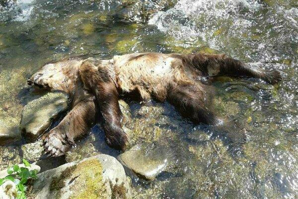 Uhynutý medveď v katastri obce Klubina