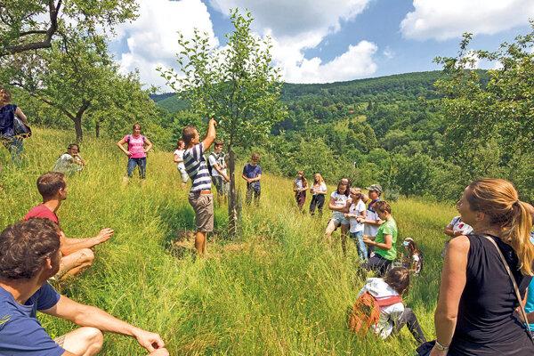 Sadovo – ovocinársky program pre žiakov a učiteľov základných a stredných škôl, v rámci ktorého účastníci mapujú staré odrody, plánujú a realizujú výsadbu či usporadúvajú ovocnú slávnosť a rovesníckym vzdelávaním odovzdávajú svoje skúsenosti spolužiakom.