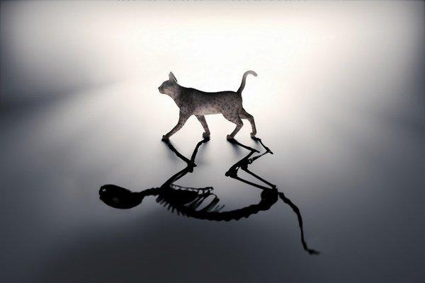 Mačka nemôže byť v skutočnosti živá aj mŕtva súčasne.