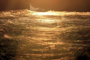 Doterajšie pokusy vyrobiť syntetické pavúčie vlákna stroskotali.