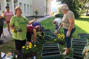 Dobrovoľníčky z únie žien. Vysádzali kvety do kvetináčov, ktoré osadia na zábradlie na moste, aby ho skrášlili.