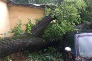 Spadnutý strom v Barci.