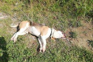 Pes zahynul za obcou.