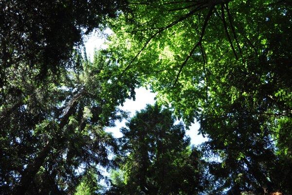 Prirodzený les si dokáže udržať výrazne nižšiu teplotu než má jeho okolie.