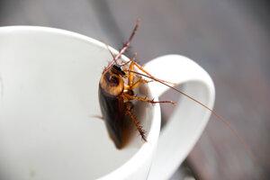 Šváby vďaka dedičnosti prenášajú na potomkov zvýšenú všeobecnú odolnosť voči chemickým postrekokm na hubenie hmyzu.
