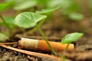 Ohorky cigariet ovplyvňujú šance na vyklíčenie aj dĺžku stonky rastín.
