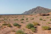 Hory a púšť okolo Červeného mora v severozápadnej časti Saudskej Arábii, z ktorej sa má stať Neom.