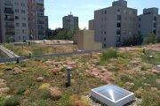 Zelená strecha je moderným riešením ako priniesť viac zelene do bývania.
