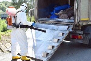 Dezinfekcia po vykonaní nariadeného preventívneho usmrtenia ošípaných.
