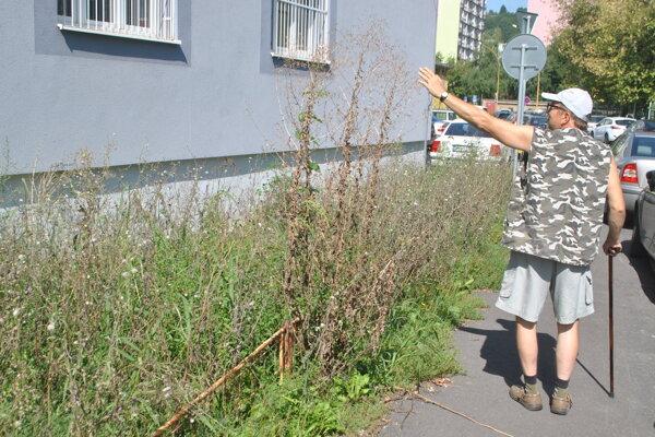 Burina má miestami výšku vyše 150 cm.