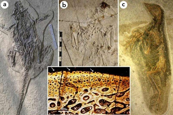 Dávne čínske fosílie.