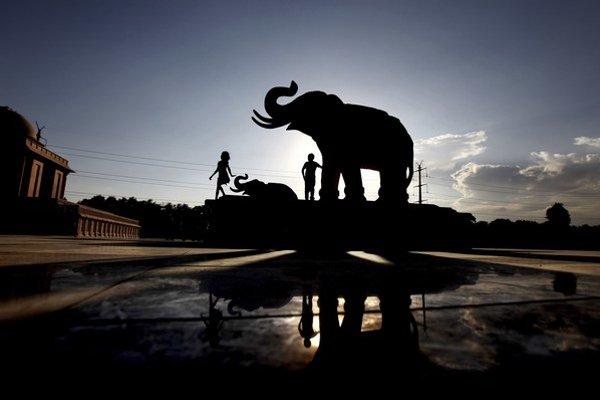 Slony ľuďom rozumejú.