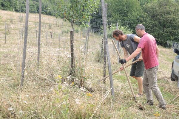 Dobrovoľníci v ovocnom sade.