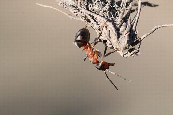 Od mravcov sa môžeme učiť.