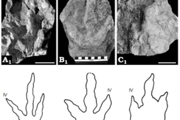 Ukážka stôp dinosaurov z Tatier.