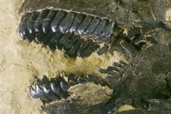 Čeľuste bylinožravého camarasaura.