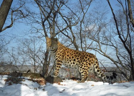 leopardica2.jpg