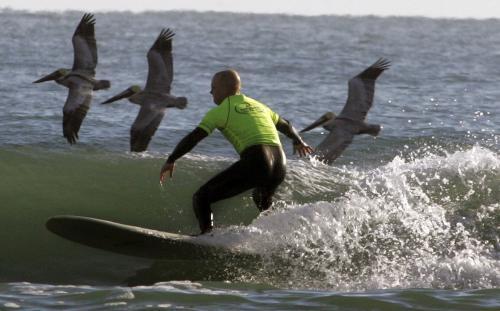 surfer-pelikany_sitaap.jpg