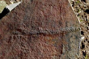 Stopa, ktorú po sebe zanechal drobný článkonožec v skale starej 550 miliónov rokov.