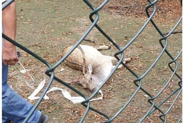 Uhynuté zviera v obore.