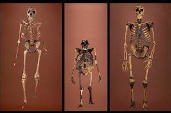 Australopithecus afarensis (v strede) nemal mozog či telo oveľa väčšie ako dnešný šimpanz.