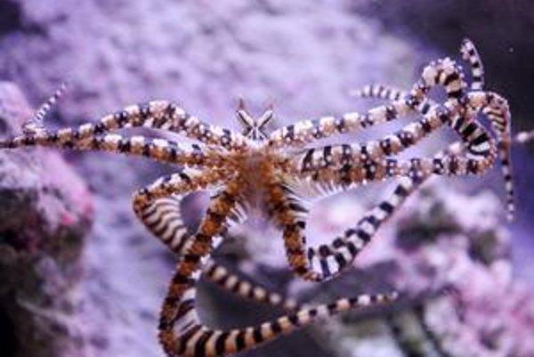 Život pod hladinou mora by sme mali podrobnejšie preskúmať.
