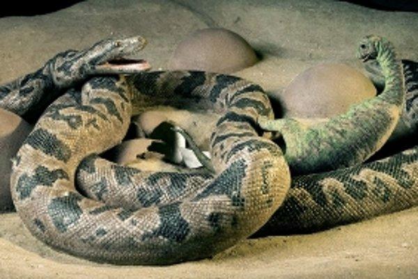 Mláďatá dinosaurov ohrozovali aj veľké hady.
