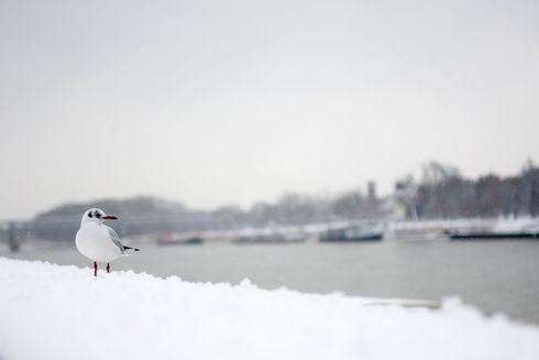 sneh10_res.jpg