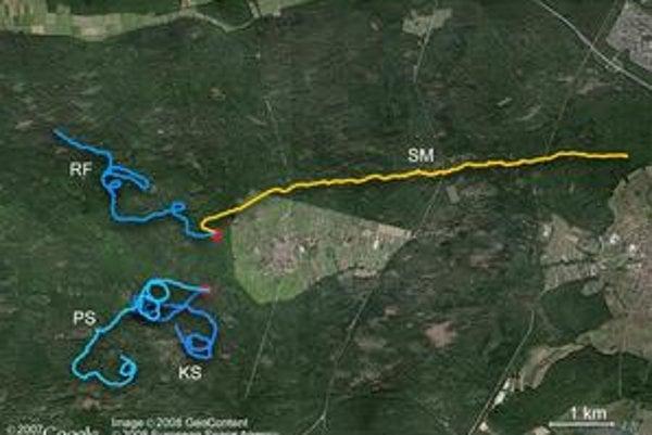 Experiment s orientáciou v Bienwaldskom lese. Účastníci PS, KS a RF nevideli slnko, SM áno.