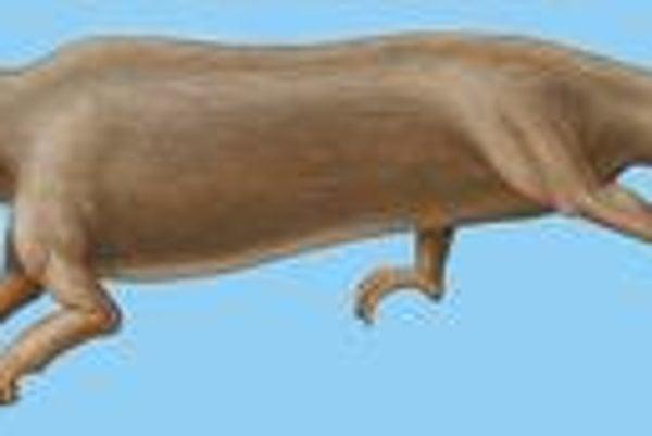 Predchodca dnešnej veľryby rodil a oddychoval na súši.