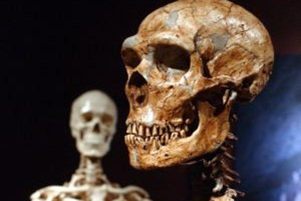 Rekonštrukcia kostry neandertálca (vpravo) a moderného človeka (vľavo) vystavené v Múzeu dejín prírody v New Yorku.