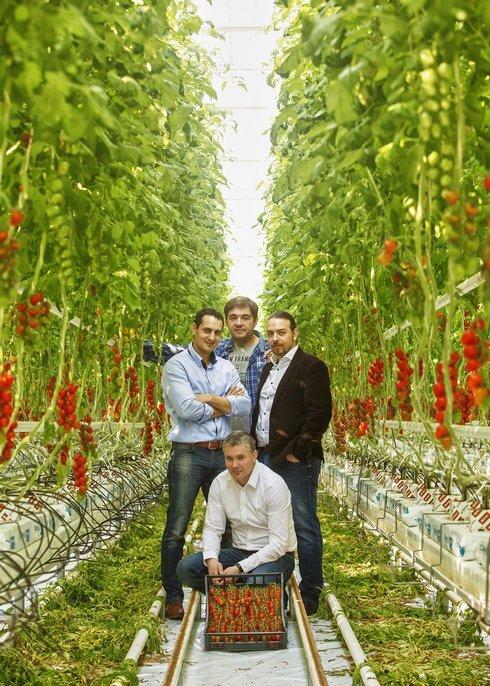 _mst_greencoop_paradajky_rajciny_polnoho_r9924_res.jpg