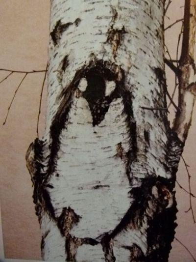 brezy-tucniak.jpg