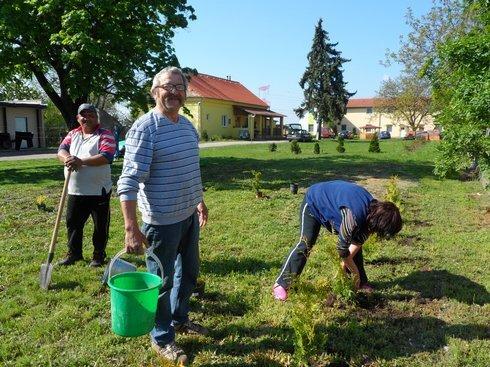 stromy-kuliskova-surany-3_r8484_res.jpg