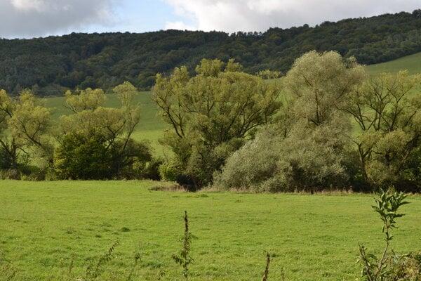 Lokalita, v ktorej vyrúbali stromy. Hniezdil tam orol krikľavý.