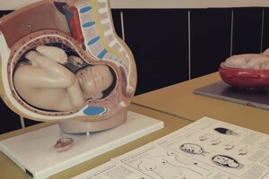 Výstava Život zo skúmavky bude prístupná do konca októbra.