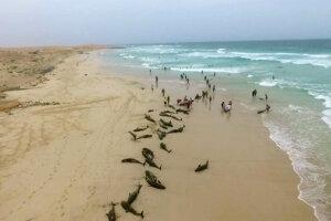 Na ostrove Boa Vista v utorok našli až približne dvestozvierat.