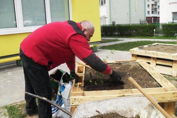 Komunitná záhrada vo Svidníku.