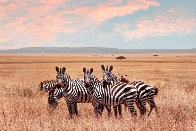 Počas dovolenky v Zanzibare si možno odskočiť na africké safari na pevninu.