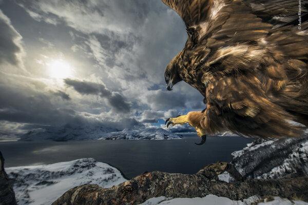Víťaz v kategórii Správanie vtákov: Pristátie orla.