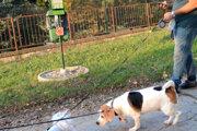 Nie každý pes je z toalety nadšený.