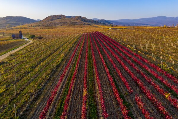 Pezinské vinohrady.