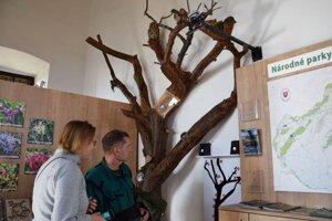 Po rekonštrukcii. Strom s hlasmi vtákov.