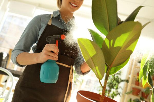 Izbové rastliny nemajú schopnosť vyčistiť vzduch v domácnosti.