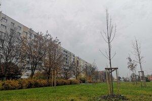 Prešov má nízke čerpanie z prostriedkov na náhradnú výsadbu stromov. Mesto zatiaľ zvažuje, kde nové stromy vysadia.