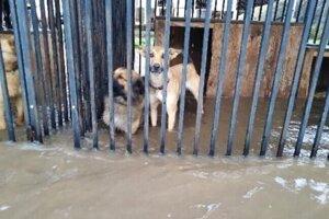 V revúckom útulku ohrozovala zvieratá stúpajúca hladina vody.