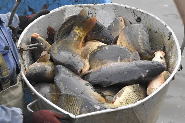 Podľa porybného sú ryby zdravé a krásne.
