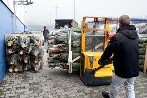 O stromčeky z Kysúc už nie je záujem. V minulosti sa dokonca vyvážali.