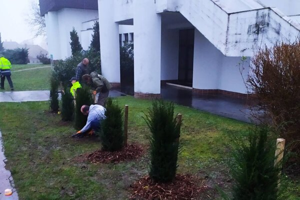 Vysadili nové stromy.